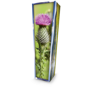 Scottish Thistle. Please call for best prices