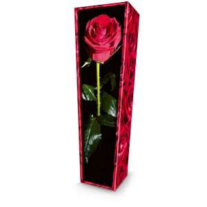 Red Rose. Please call for best prices