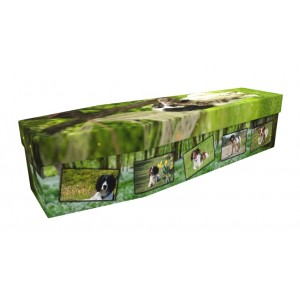 Spaniel Dog - Animal & Pet Design Picture Coffin