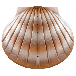 Biodegradable Cremation Ashes Urn - THE SHELL (Sand)