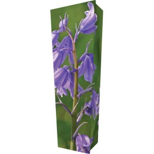 Beautiful Bluebell - Personalised Picture Coffin with Customised Design.