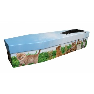 Cats – Animal & Pet Design Picture Coffin
